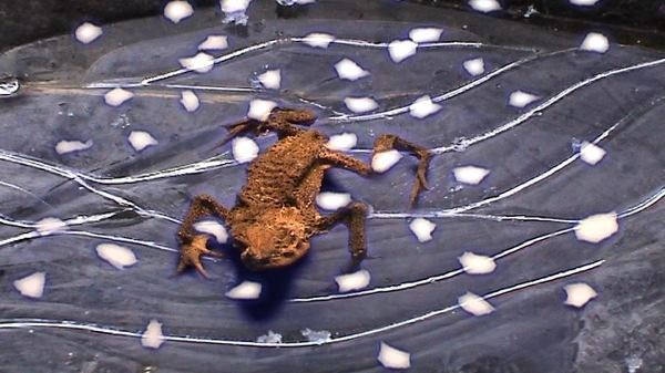 frogspin3